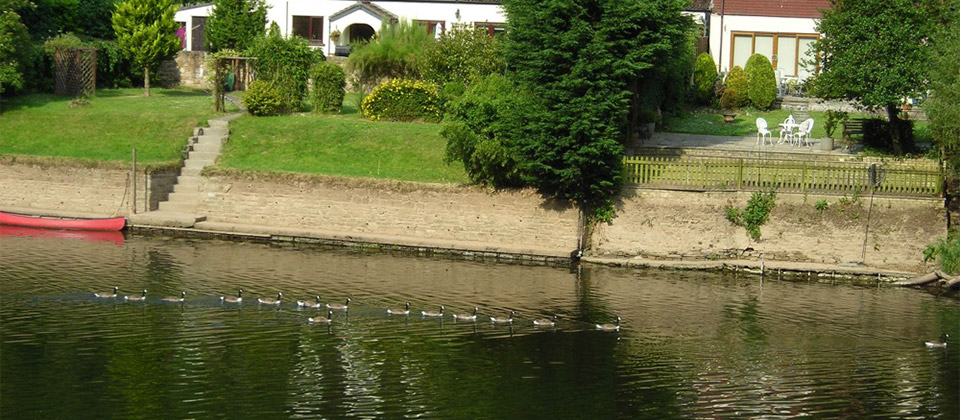 image showing Canada Geese form an orderly queue on the River Wye